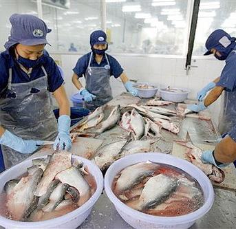Cá tra có nguy cơ bị mất thị trường Brazil