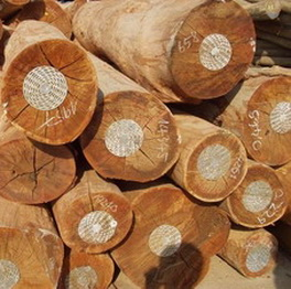 Xuất khẩu gỗ trái Luật Lacey có thể bị phạt đến 500.000 USD