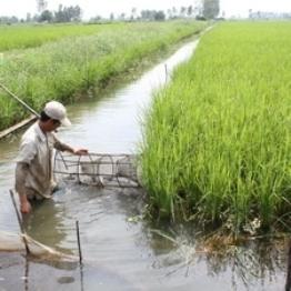 Điều chỉnh quy hoạch đất trồng lúa của 33 tỉnh, thành phố