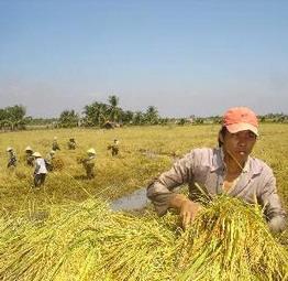 FAO kêu gọi tăng sản lượng lương thực thế giới